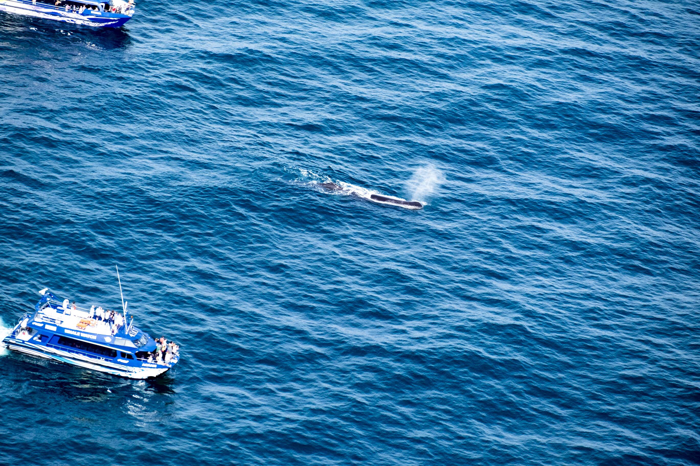 walvis 4